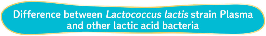 Difference between Lactococcus lactis strain Plasma and other lactic acid bacteria